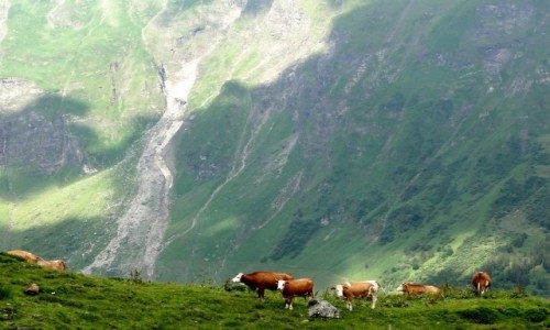 AUSTRIA / Wysokie Taury / Grossglokner Hochalpenstrasse / Alpejskie klimaty