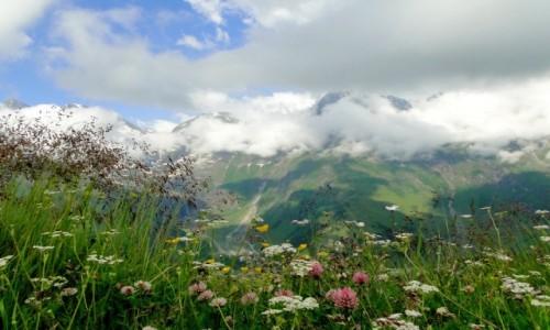 Zdjecie AUSTRIA / Wysokie Taury / gdzieś przy Grossglokner Hochalpenstrasse / Na alpejskich łąkach