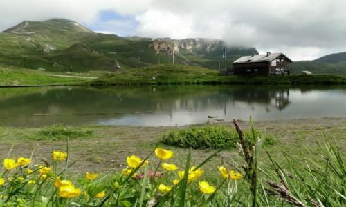 AUSTRIA / Salzburg / Park Narodowy Wysokie Taury / Alpejskie lato