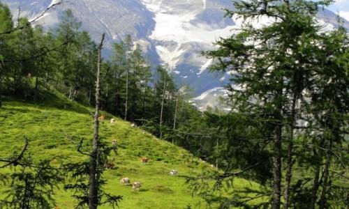 Zdjecie AUSTRIA / Kraj Salzburski / Park Narodowy Wysokie Taury / Alpejskie widoki