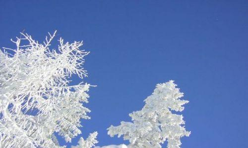 Zdjęcie AUSTRIA / Austria / Austria / białe piękno