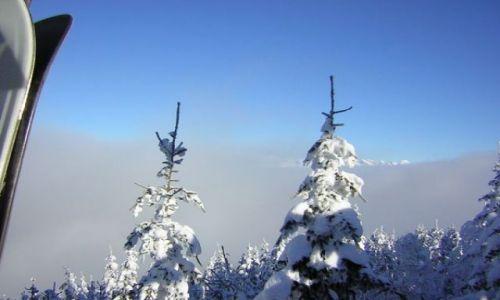 Zdjęcie AUSTRIA / Austria / Austria / śnieżna kraina