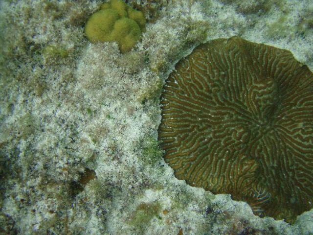Zdj�cia: Eleuthera Island, podwodny �wiat, BAHAMY
