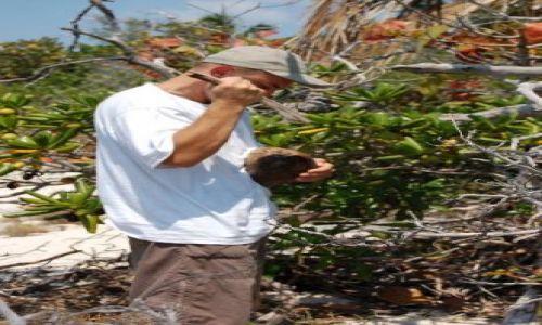 Zdjęcie BAHAMY / brak / Eleuthera Island / O tym jak (ro)zbijać kokosy