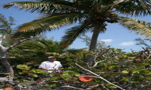 Zdjęcie BAHAMY / brak / Eleuthera Island / palma kokosowa i ja
