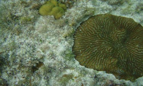 Zdjęcie BAHAMY / brak / Eleuthera Island / podwodny świat