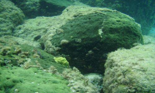 BAHAMY / brak / Eleuthera Island / podwodny świat 2