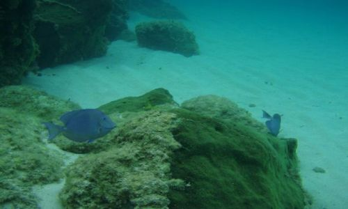 BAHAMY / brak / Eleuthera Island / podwodny świat 3