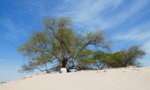 Zdjęcie BAHRAJN / Al-Muhafazat al-Dżanubijja /  Jebel Dukhan / Tree of Life