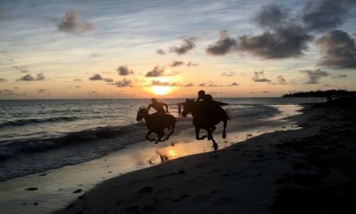 BARBADOS / Karaiby / Oistins / riders