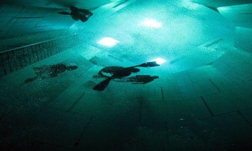 Zdjecie BELGIA / - / Bruksela / Nurkowanie w Nemo33