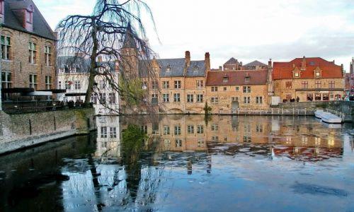 Zdjęcie BELGIA / Flandria / Brugia / Kra na kanale w Brugii