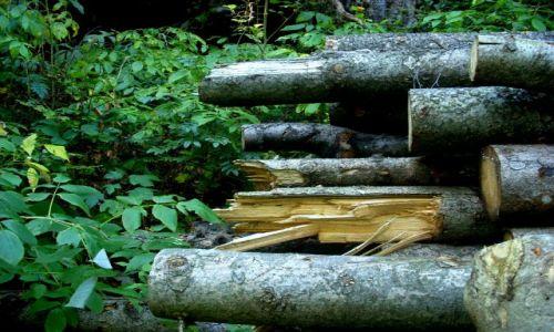 Zdjecie BELGIA / - / Namur / a w lesie...