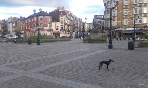 Zdjecie BELGIA / Znajduje się w Regionie Stołecznym Brukseli / (BE) Vorst  (Forest) / Na deptaku w Vorst  (Forest)