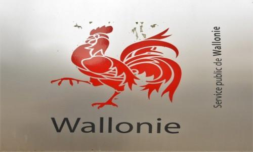 Zdjecie BELGIA / Walonia / Arlon / Godło Walonii