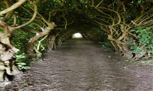 Zdjęcie BELGIA / Walonia / Arlon / Arlon, tunele w 350 letnim żywopłocie