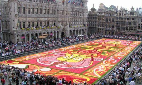 Zdjęcie BELGIA / brak / Bruksela / Kwiatowy dywan 77x24 m z begonii
