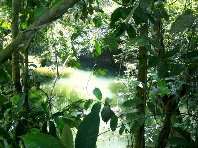 Zdjęcia: gdzies w Belize, w dzungli, BELIZE