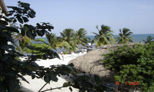 Zdjęcie BELIZE / Belize / Belize / Palmowe widoki