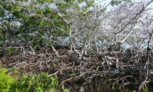 Zdjecie BELIZE / South Water Caye / Hideaway Caye / Mangrowe