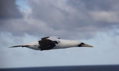 Zdjęcie BERMUDY (WIELKA BRYTANIA) / Bermuda / Bermuda / Aerodynamic