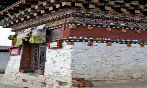 Zdjecie BHUTAN / Bumthang / Tamshing Goemba / Medytacja...