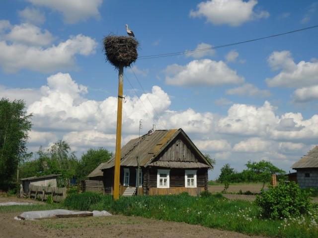 Zdjęcia: Osownica (biał. Asaunica), Obwód brzeski / Polesie, Poleskie klimaty ...., BIAłORUś