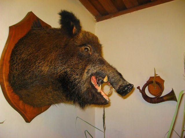 Zdjęcia: Zaosie, Nowogródzki, eksponat z muzeum w Zaosiu, BIAłORUś