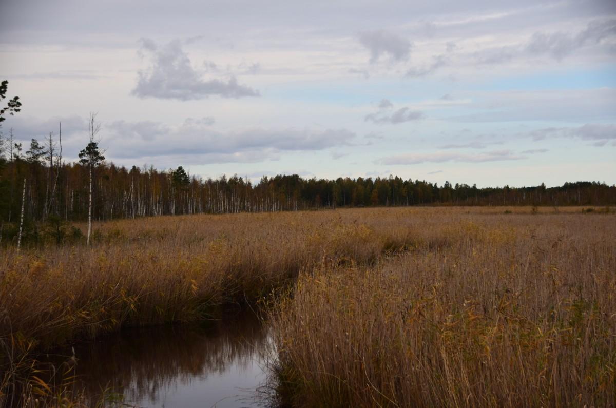 Zdjęcia: Puszcza Nalibocka, Okręg Miński , W dolinie rzeki, BIAłORUś