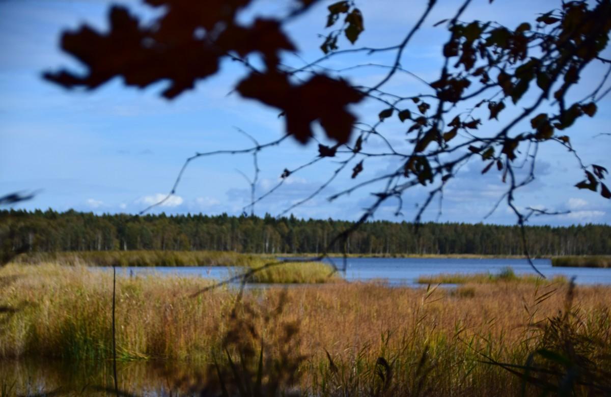 Zdjęcia: Berezyński Rezerwat Biosfery, Okręg Miński , Jezioro i las, BIAłORUś