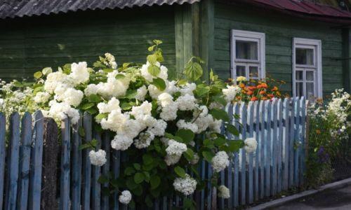 BIAłORUś / obwód grodzieński / Nowogródek / W ogródku przy chatce