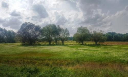 BIAłORUś / Brzeski / okolice Znamienki / Uroki białoruskich pustkowi