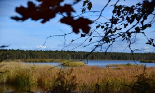 Zdjecie BIAłORUś / Okręg Miński  / Berezyński Rezerwat Biosfery / Jezioro i las