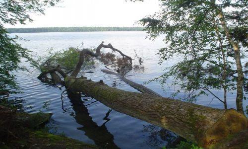 Zdjecie BIAłORUś / - / jezioro Świteź / nad Świtezią