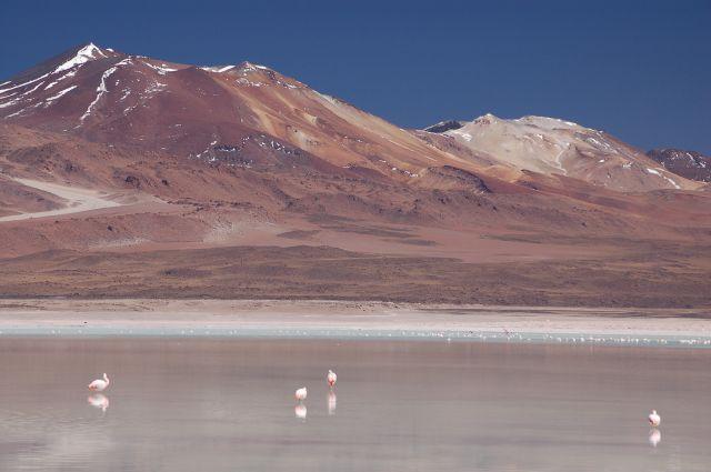 Zdjęcia: Okolice Uyuni, Południowa Boliwia przy granicy z Chile, Laguna Blanca, BOLIWIA
