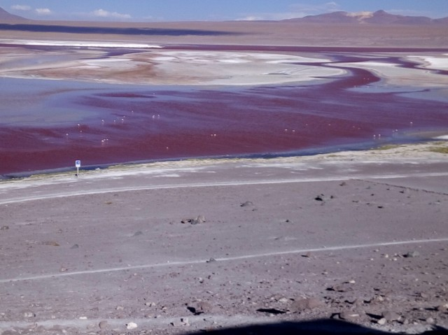 Zdjęcia: Laguna Colorada 4300m.n.p.m., Reserva Nacional de Fauna Andina Eduardo Avaroa, CHILE I BOLIWIA - SAMOTNIE I INTENSYWNIE, BOLIWIA