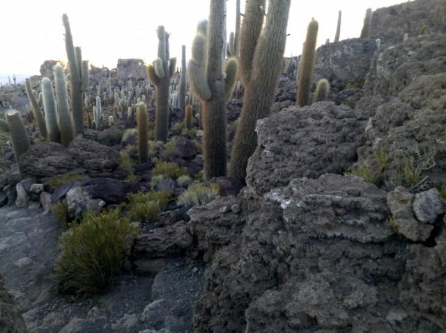 Zdjęcia: Wyspa Incahuasi, Salar de Uyuni, CHILE I BOLIWIA - SAMOTNIE I INTENSYWNIE, BOLIWIA