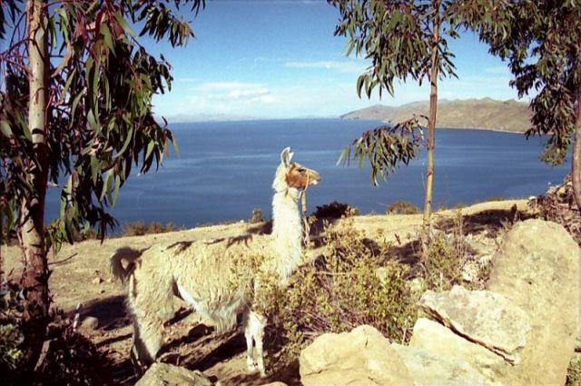Zdjęcia: Isla de Luna, ***, BOLIWIA
