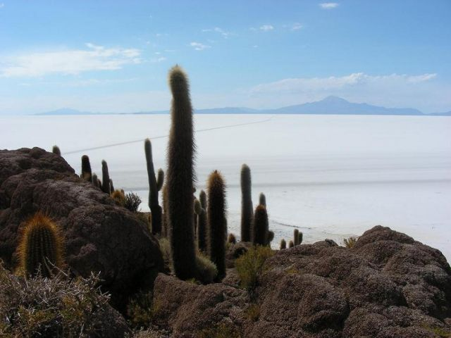 Zdjęcia: Solar de Uyuni, Solar de Uyuni, Isla del Pescadores, BOLIWIA
