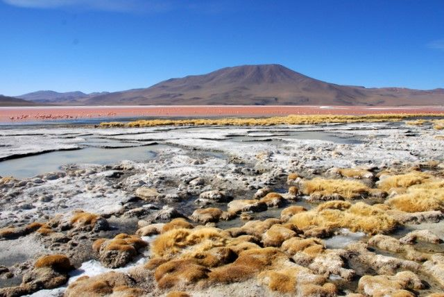 Zdjęcia: Laguna Colorada, Salar de Uyuni, Laguna Colorada, BOLIWIA