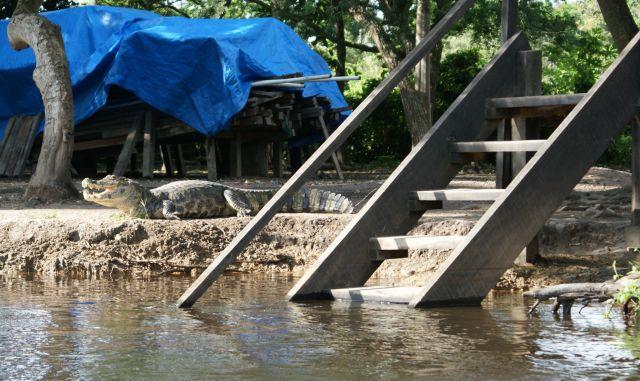 Zdjęcia: w Amazoni, Gdzieś, Ja tu pilnuje...., BOLIWIA
