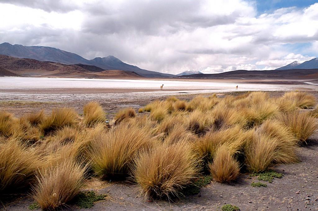 Zdjęcia: płaskowyż Altiplano, konkurs-dal, BOLIWIA