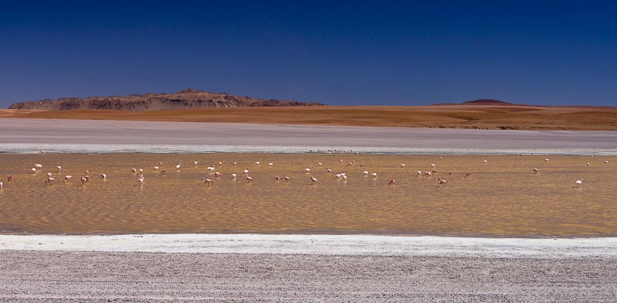 Zdjęcia: laguna po drodze, Altiplano, Życie na lagunie, BOLIWIA