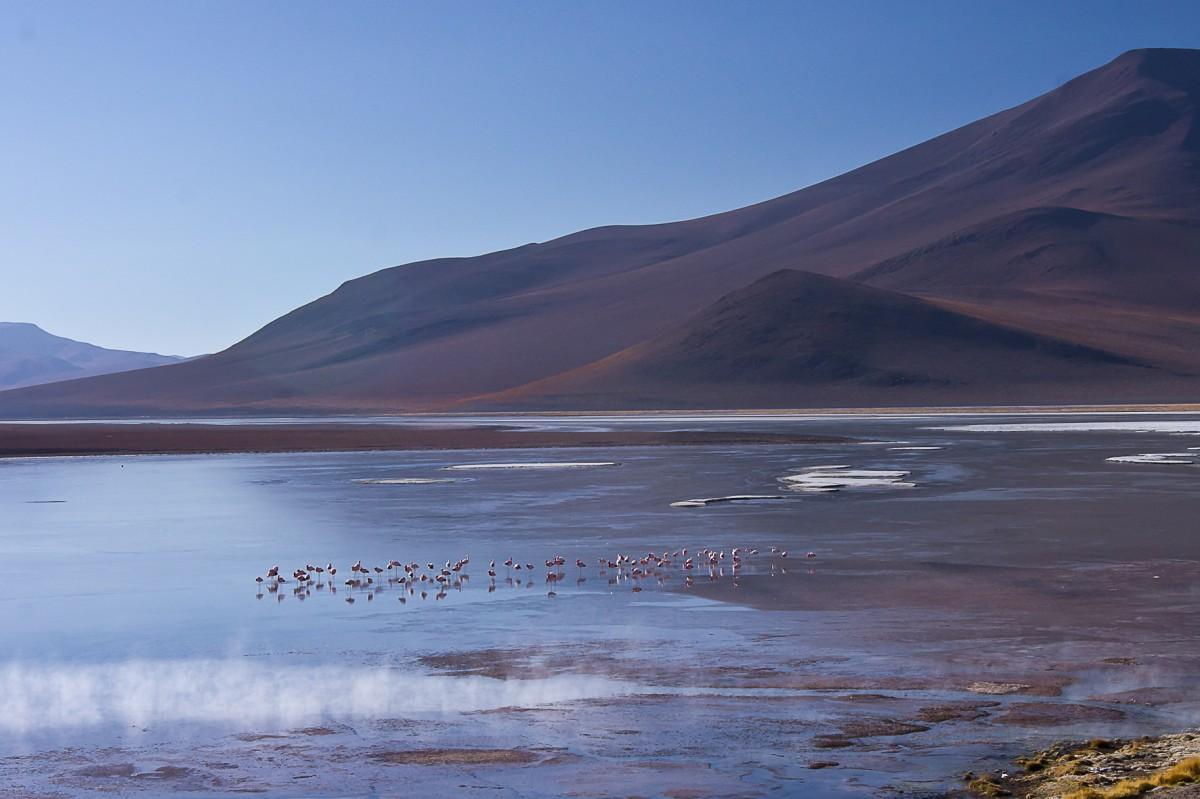 Zdjęcia: ok.4000 m npm, płd-zach Boliwia, Poranek na lagunie, BOLIWIA