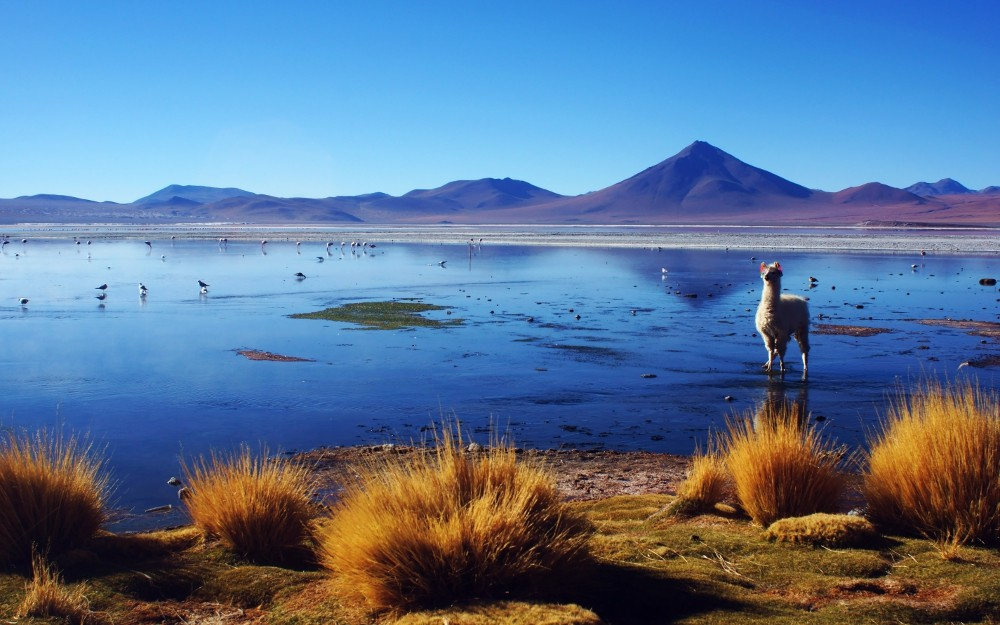Zdjęcia: Laguna Colorada, Potosi, Laguna colorada., BOLIWIA