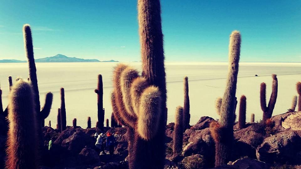Zdjęcia: Isla del Pescado, Uyuni, Salar the Uyuni, BOLIWIA
