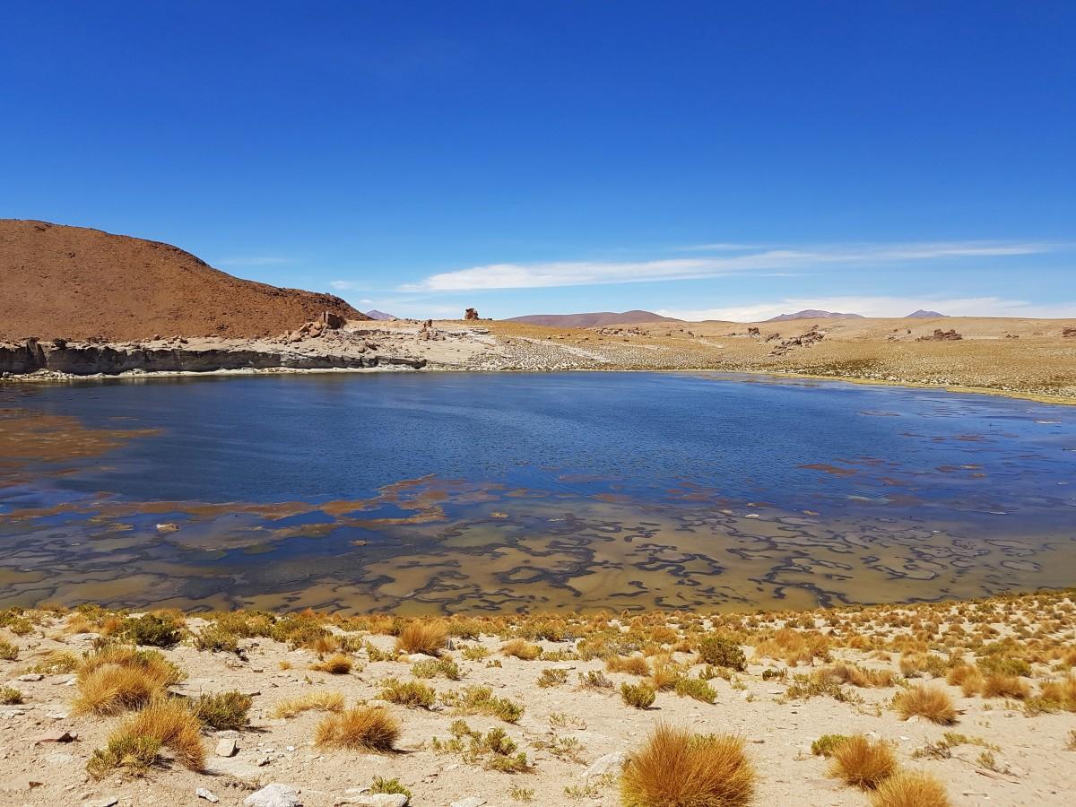 Zdjęcia: Laguna Negra, Altiplano-Potosi, Laguna Negra, BOLIWIA
