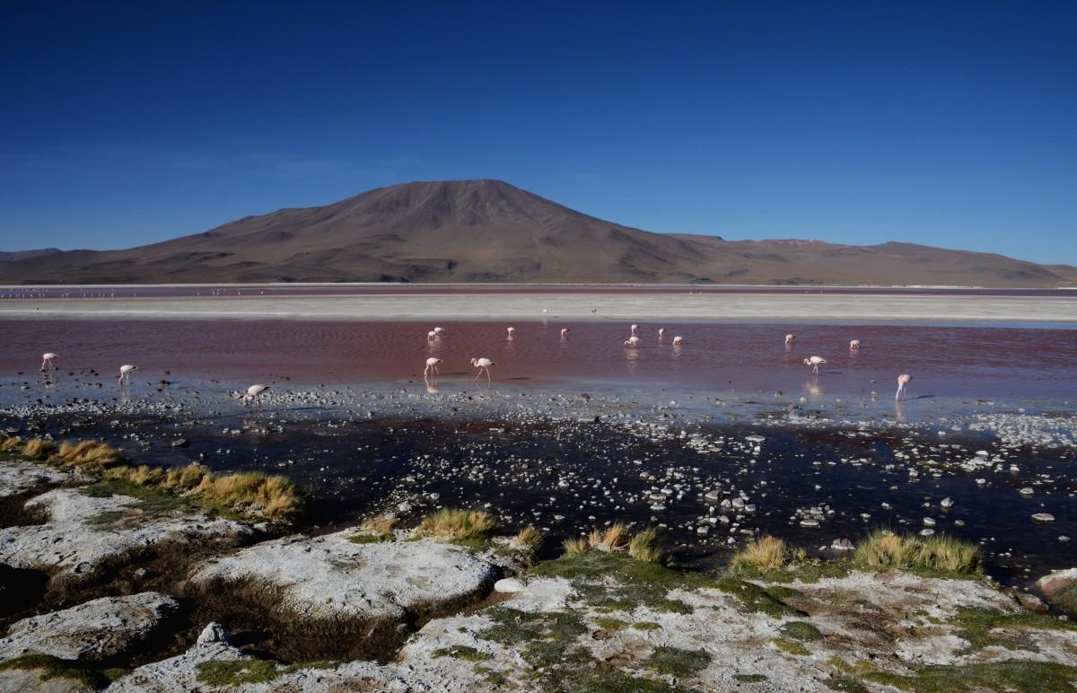 Zdjęcia: Laguna Colorada, Altiplano-Potosi, Widoczek z ptaszkami :), BOLIWIA
