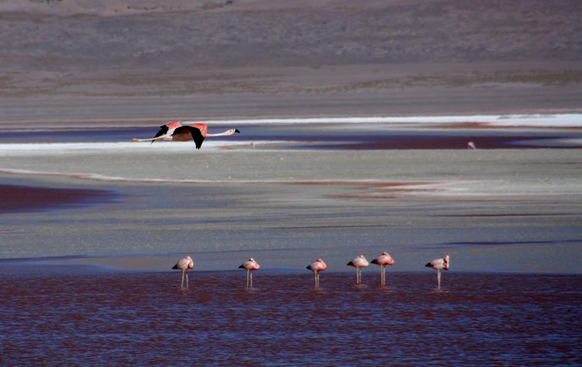 Zdjęcia: Laguna Colorada, Altiplano-Potosi, Kontroler ;), BOLIWIA
