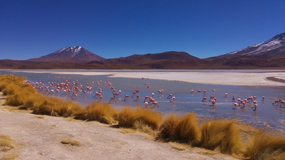 Zdjęcia: Laguna Cañapa, Altiplano, Laguna Cañapa, BOLIWIA